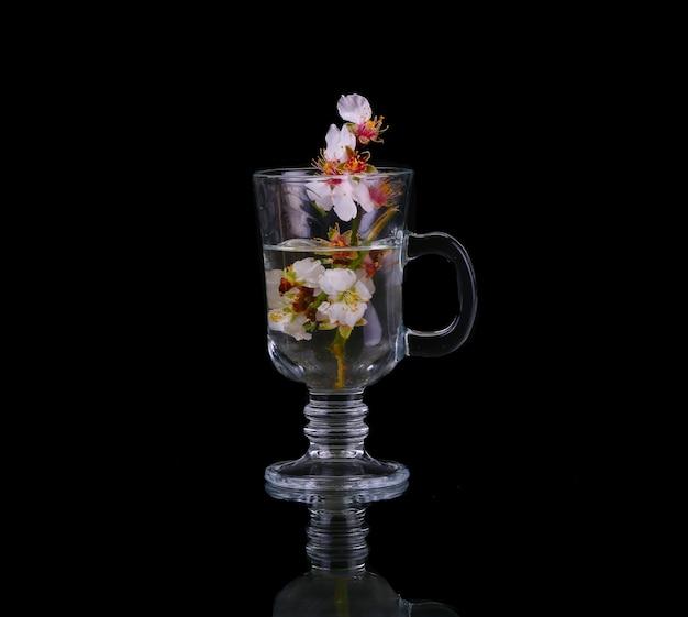 Filiale di fioritura della ciliegia in una tazza di acqua su una priorità bassa nera