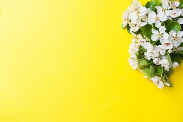 Filiale di fioritura primaverile su sfondo giallo