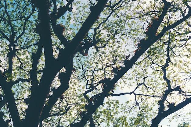 Filiale di grande albero in autunno
