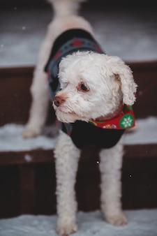 Fine bianca del piccolo cane in su