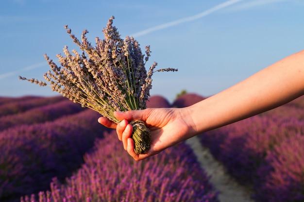 Fine del fiore della lavanda in su in un campo in provenza francia