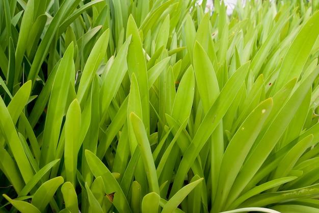 Fine dell'erba verde in su
