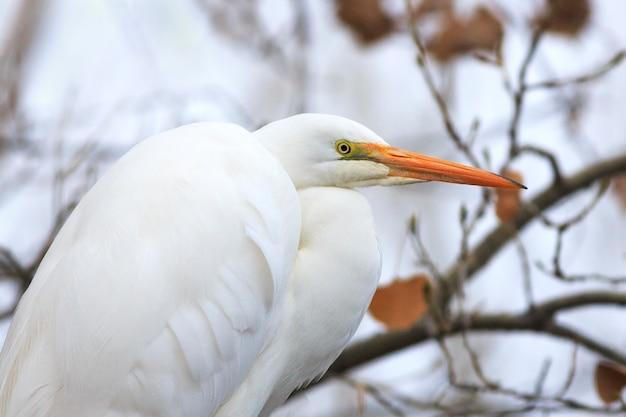 Fine dell'uccello dell'egretta di snowy su