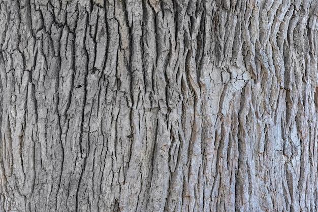 Fine della corteccia di quercia sul fondo di struttura