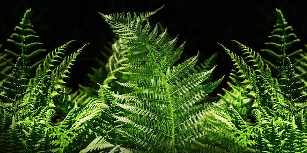 Fine della felce delle foglie verdi su su fondo scuro. banner per il web.