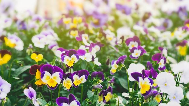 Fine della foresta della primavera sui fiori bello fondo