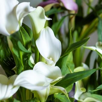 Fine della pianta del fiore del giglio di arum su