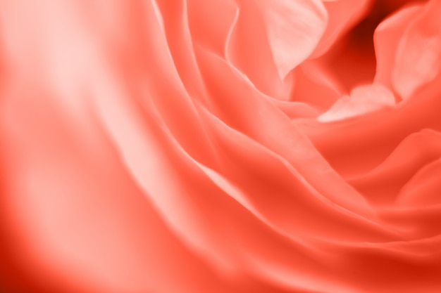 Fine di macrofotografia del fiore della rosa di corallo su dei petali