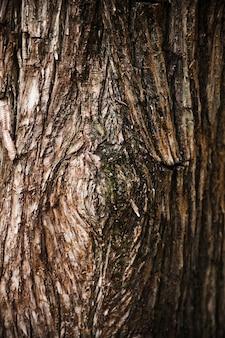 Fine di struttura del tronco di albero su