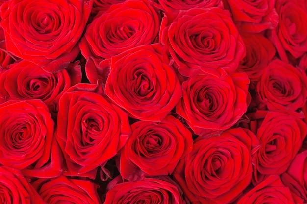 Fine naturale del fondo delle rose rosse su struttura