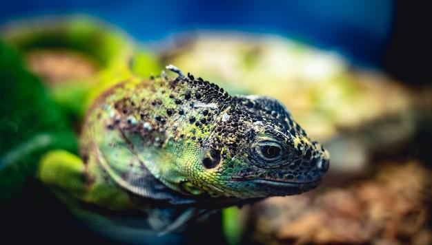 Fine piccola della testa della lucertola verde su