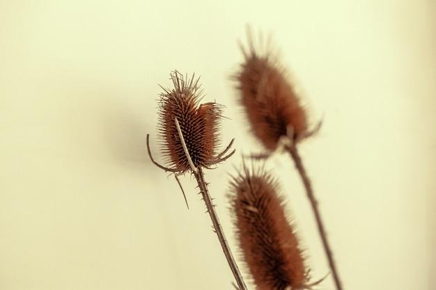 Fine secca del mazzo dei fiori di autunno a casa su