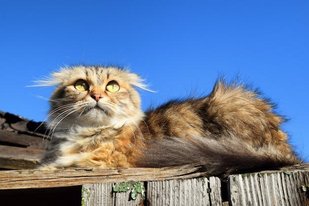 Fine sveglia del gatto su fondo