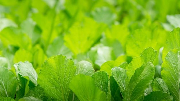 Fine verde astratta dell'orto in su