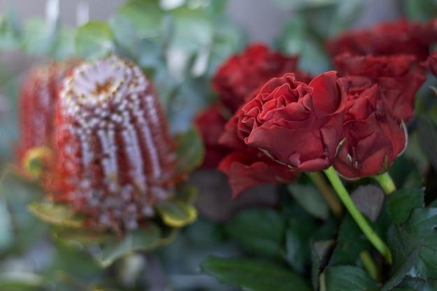 Finestra del negozio di fiore del primo piano con i fiori esotici, fuoco selettivo