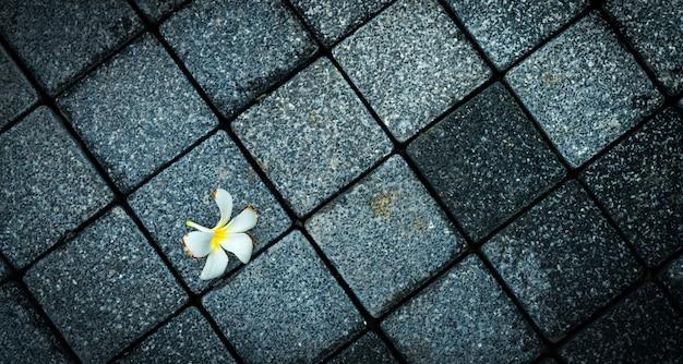 Fiore appassito sulla strada cementata nera e grigia vuota. morto e sfondo di morte.