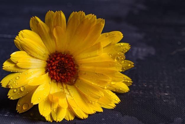 Fiore arancione isolato su sfondo bianco