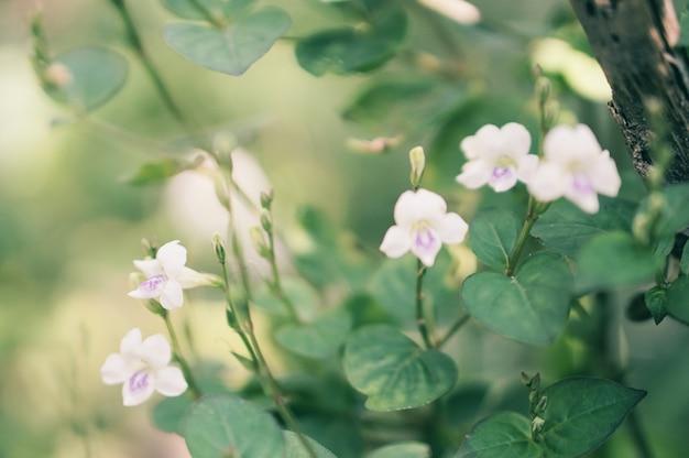 Fiore bianco dell'erba selvatica che fiorisce in natura
