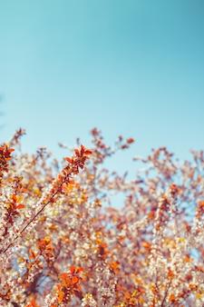 Fiore bianco e foglie