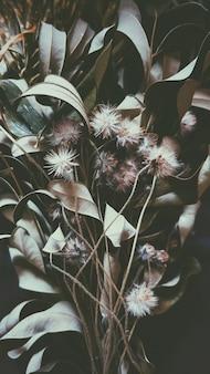Fiore bianco e marrone nella fine su nuova fotografia, sfuocatura del fondo del fuoco selettivo