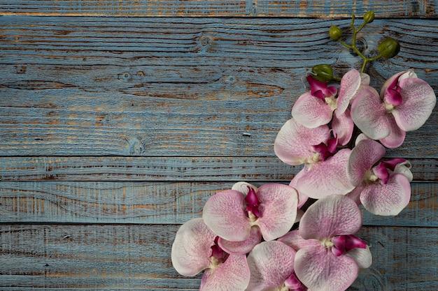 Fiore bianco rosa dell'orchidea su fondo di legno blu