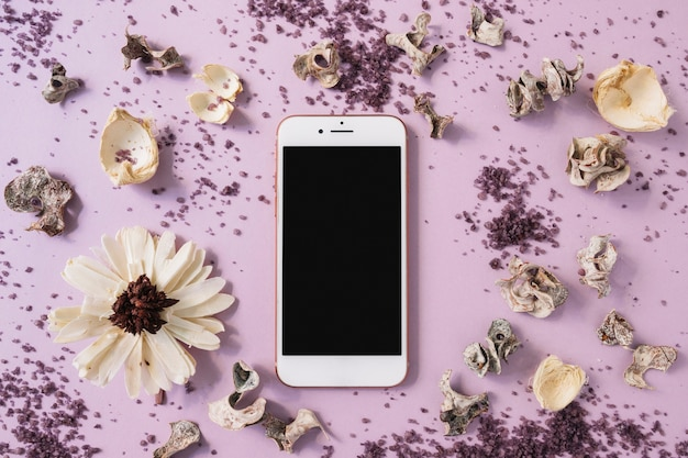 Fiore bianco; scrub e baccello secco intorno allo smartphone su sfondo rosa