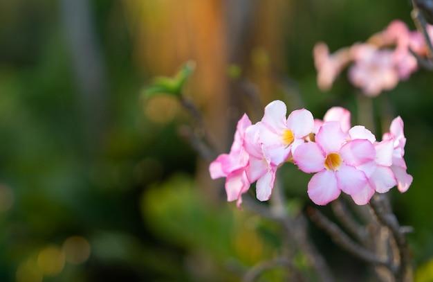 Fiore bianco sulla natura verde