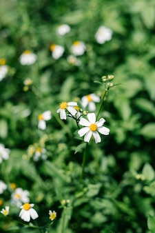 Fiore che sboccia