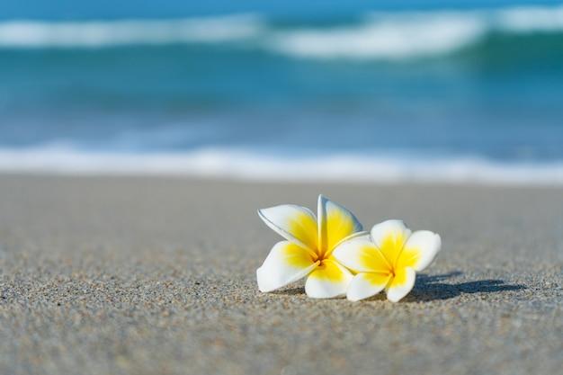 Fiore del frangipane sulla spiaggia contro la parete del mare. vacanze ai tropici. calma e relax con il concetto di mare