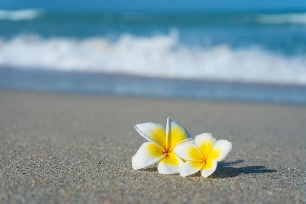 Fiore del frangipane sulla spiaggia contro lo sfondo del mare. vacanze ai tropici. calma e relax con il concetto di mare