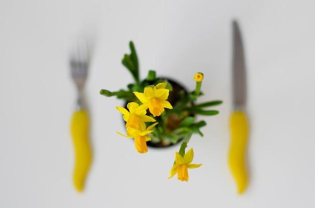 Fiore del narciso su bianco. forchetta e coltello. vista dall'alto