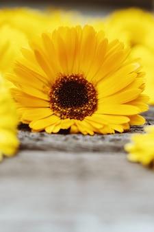Fiore del tagete su superficie di legno