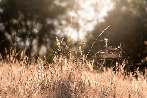 Fiore dell'erba che ha riflesso la luce solare di mattina.
