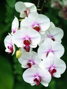 Fiore dell'orchidea del primo piano nel fondo del giardino di inverno