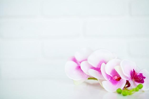 Fiore dell'orchidea su fondo bianco