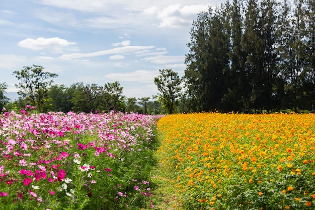 Fiore dell'universo che fiorisce nel field-8
