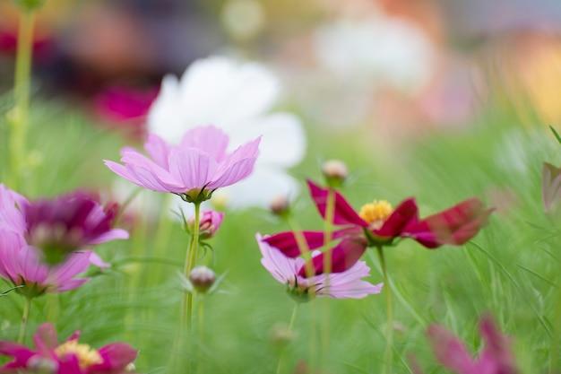 Fiore dell'universo nel giardino