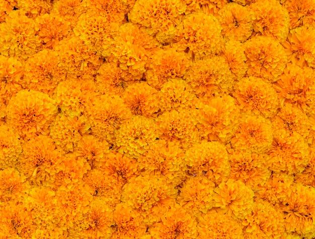 Fiore di calendula giallo