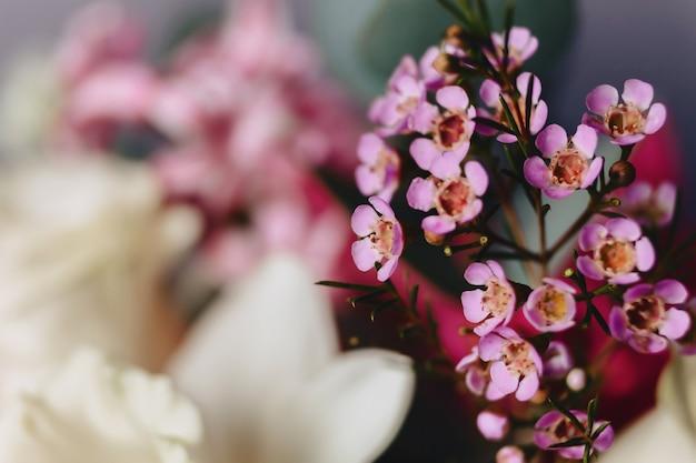 Fiore di chamelaucium su sfondo semplice