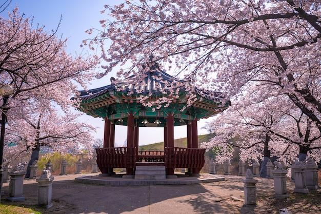 Fiore di ciliegia della primavera in parco a seoul, corea del sud