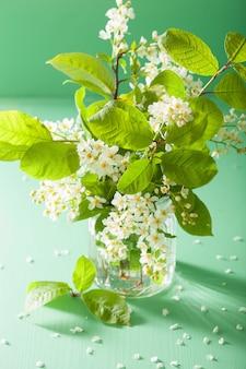 Fiore di ciliegia di uccello in vaso sul tavolo verde