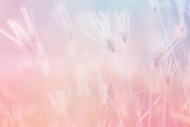 Fiore di colore dolce e pastello, foto di messa a fuoco morbida e sfocata in stile vintage