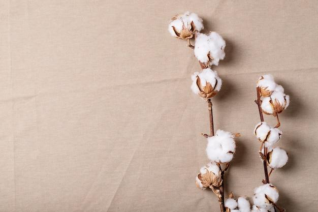 Fiore di cotone secco