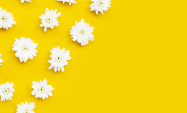 Fiore di crisantemo su sfondo giallo.