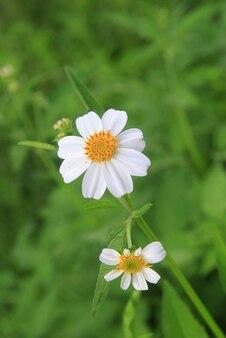 Fiore di erba bianca nella foresta