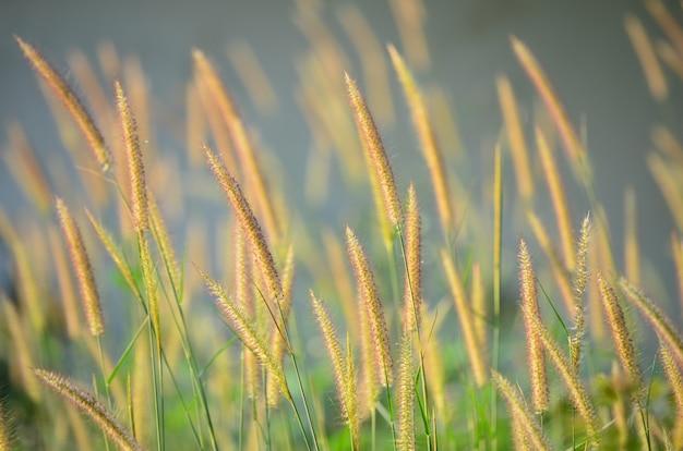 Fiore di erba con sfondo spazio copia