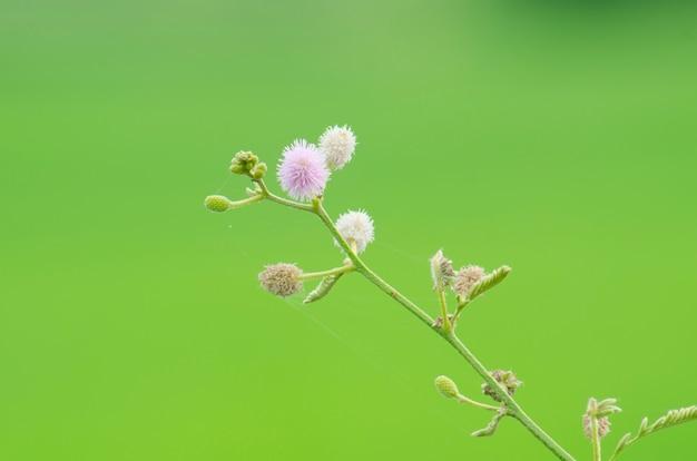 Fiore di erba su sfondo verde