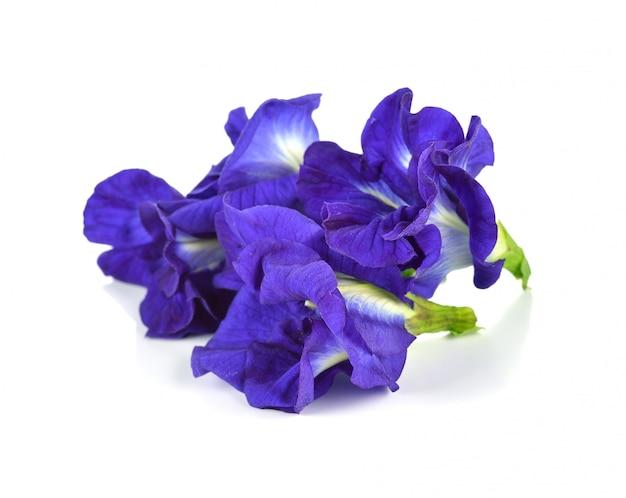 Fiore di farfalla pisello
