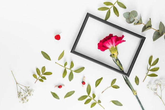 Fiore di garofano rosso con telaio sul tavolo