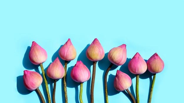 Fiore di loto rosa su fondo blu.